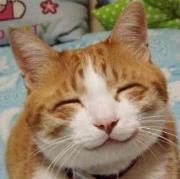 猫の目がたりMAXMAM