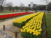修成建設専門学校 ガーデンデザイン学科のブログ