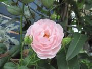 優しい時間〜flower&green