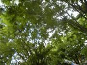 木の家生活