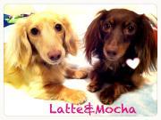☆Angelic Mocha&Latte☆