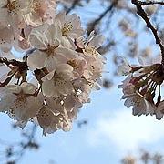 東大和市の情報〜Check!〜桜が丘フレンズ〜