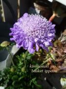 紫Basket Garden&Violet Junkie