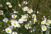 野の花日記
