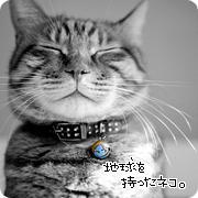 ネコさまッ。