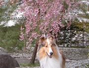 ☆名犬レオンの親ばか日記☆