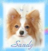 〜パピヨン〜サンディーと「おとうちゃん」の一日