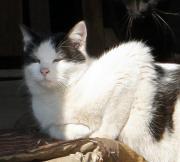 札幌猫ブログ