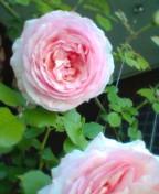 アラフォーシングルマザーの247〜酒と薔薇と娘〜