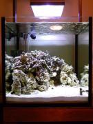 僕ちんの海水魚水槽