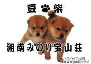 豆柴専門犬舎湘南みのり宝山荘のひとりごと