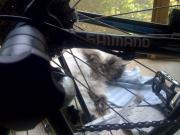 ロードバイクと海外通販生活。