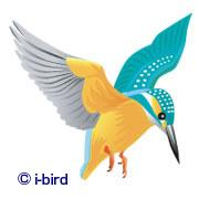 野鳥観察フィールドノート ビデスコブログ