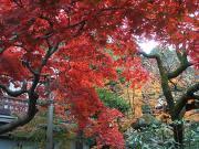 湯河原温泉 旅館 伊藤屋 公式ブログ