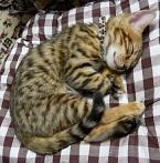 ベンガル猫 JJ・Ifrit・Dragonの部屋