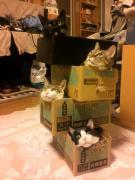 いつでもどこでも猫三昧