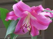 癒される花と風景写真・ランチ情報