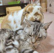 cats & rabbits