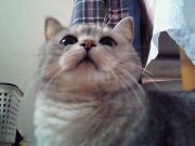 猫好き主婦の良いモノ発見