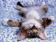 親ネコと子猫のブログ