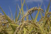 生産農家を応援