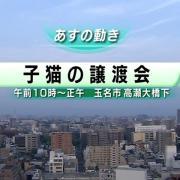 COCOAのPO・IPO日記