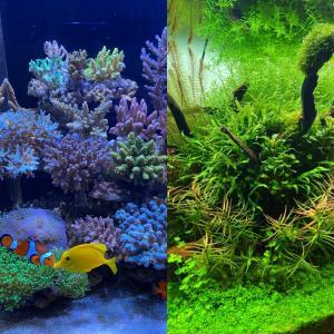 猫と水草とサンゴ
