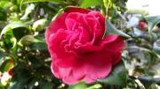 夢探し花さがしのbのブログ