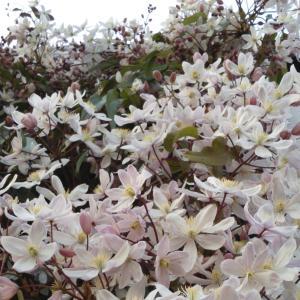 * my precious garden * ~ 大好きな植物たちとすごす ~  マイプレシャスガーデン