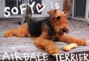 ☆AIREDALE STATION☆