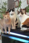 美容室ナンシーの癒し猫ブログ