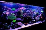 Aquarium of My Life♪