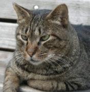 猫の郵便シャボット