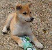 世界ジオパークの忠犬「ハチ」