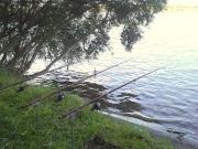 よっしーの鯉にコイするぶろぐ
