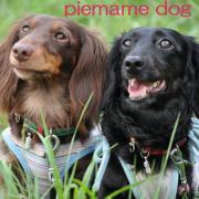 PieMame Dog - わんことベランダ菜園