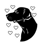 大型犬のための海外直輸入専門店 スタジオバンビ