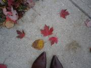 My Toronto Days
