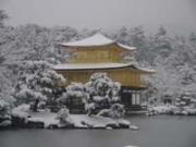 京都(春夏秋冬)おすすめ観光案内