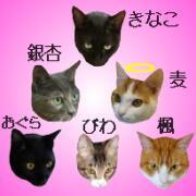 こむぎブログ 〜 猫とコンピュータ 〜