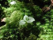 新世代エコロジー洗剤・エコロン