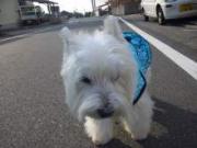 道後の町、松山でプロトコールを伝えたい