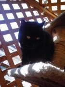 猫好き古本屋さんのきままにお喋り