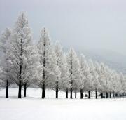 マキノ高原/メタセコイア並木