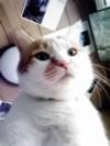 ヴィジュアル系CD専門店 CROSS CATさんのプロフィール