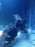 癒し系熱帯魚(アクアリウム)