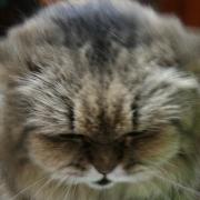 猫トレック1号さんのプロフィール