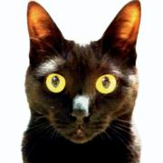 ねこ中心派 - チンチラと黒猫と虎姫 -