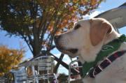 引退犬「ウィット」の日々