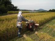 雷山のふもとで米作り